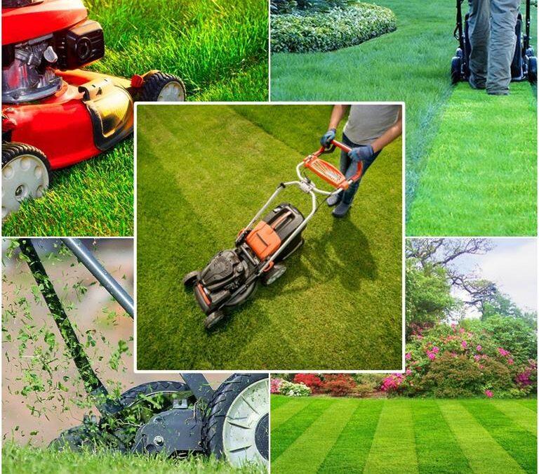 Koszenie i pielęgnacja trawnika