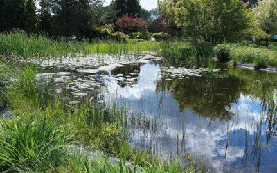 Oczka wodne, stawy ogrodowe – woda ze studni